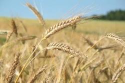Льготы на перевозку зерна продлили