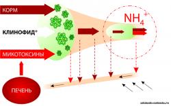 Воздействие микотоксинов на физиологические процессы и продуктивность свиней
