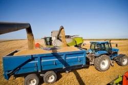Зерно из госфонда начнут реализовывать