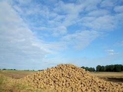 Рынок картофеля: 2009 – 1 квартал 2010 гг
