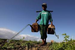 Филиппинские фермеры консультируются с учеными с помощью смс