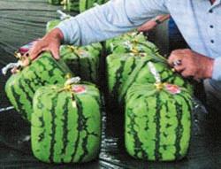 ГМО-продукты: от предубеждений к реальности