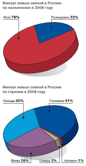 Импорт живых свиней в Россию: реальность и перспектива
