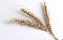 Рынок пшеницы в 2009 году