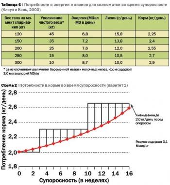 Кормление современных свиноматок и управление хозяйством для оптимизации производительности животных