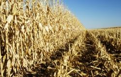 Опубликован доклад ФАО об интегрированных продовольственных и энергетических системах