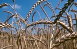 ЕС должен поторопиться с легализацией ГМО в кормопроизводстве