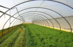 Красноярское овощеводство научится обходиться собственными силами