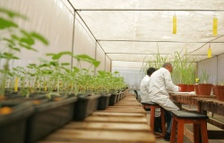 Мини-лаборатория обеспечит сохранность урожая зерновых