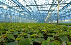 В Ростове построят экологичный тепличный комплекс