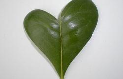 Молекулярное сердце растений