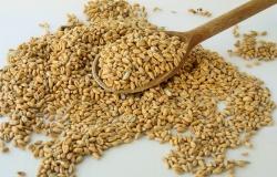 Использование пшеницы в кормлении свиней