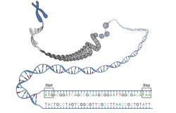 Секвенирование генома свиньи и его влияние на развитие животноводства