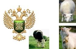 Рогатый скот в Европе поражает новый вирус