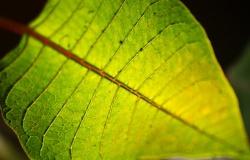 Искусственный фотосинтез