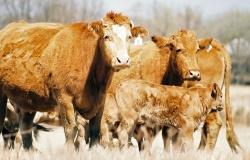 С 20 марта запретят ввоз европейского мяса