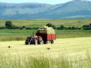 Заготовка кормов – качество или количество?