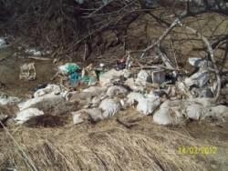 Нарушение порядка утилизации биоотходов в Воронежской области