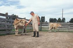 Проблема использования кетамина в ветеринарии