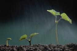 Засуха в США приведет к росту доходов в сельском хозяйстве