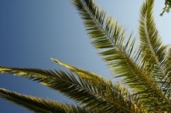 Мировое потребление пальмового масла может вырасти