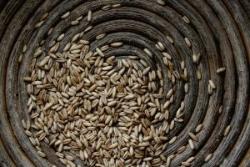Учёные из Великобритании рассчитали рост цен на зерно до 2030 года