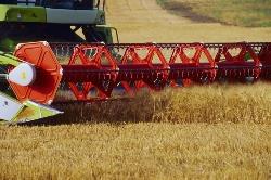 Прогноз урожая зерновых и масличных существенно снижен