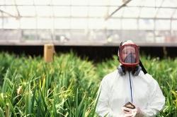 В России набирает обороты рынок ГМО