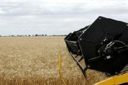 Из-за информации об интервенциях снизилась динамика роста цен на зерно