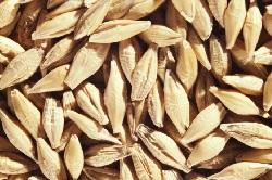 Запасы зерна в России снизились на 26,2%