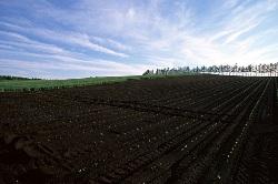 Минсельхоз согласился изымать пустующие сельхозземли
