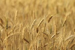 География зерновых интервенций расширяется