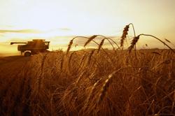 Производство зерновых в ЕС в 2012-13 годах снизится до 267,6 млн тонн