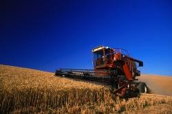 Экспорт российской пшеницы в Китай