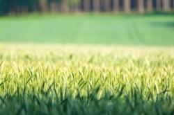 Геном пшеницы подарит человеку устойчивые к болезням растения и дешёвый хлеб