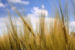 Результаты биржевых торгов на НТБ 04.12.2012 при проведении зерновых госинтервенций