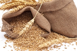 Сезон высоких цен на зерно