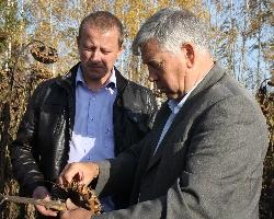 Молдавский подсолнечник на российской земле: перспективы и прогнозы