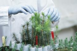 НИИ Вавилова может потерять уникальную коллекцию семян