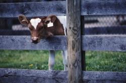 В Новосибирской области строится крупный животноводческий комплекс на 4,5 тысяч коров
