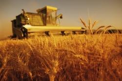 Кредитование крупного бизнеса в сельском хозяйстве остается привилегией госбанков