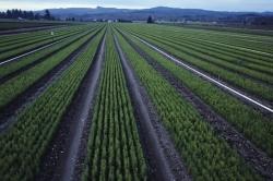 Сокращение сельскохозяйственных земель