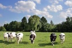 Стоимость крупного рогатого скота за год выросла на 7,5%