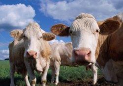 Поправки к проекту ФЗ «Об ответственном обращении с животными»