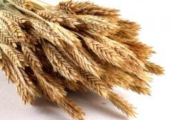 Минсельхоз может отменить импортные пошлины на зерно