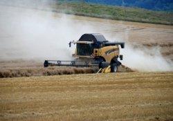 Стоимость российского зерна достигла рекордной отметки