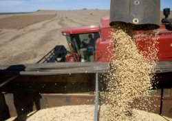 Урожай 2013 года может стать переломным для сельхозотрасли