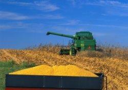 Почему Россия вошла в новый год с самыми низкими запасами зерна за последние 5 лет