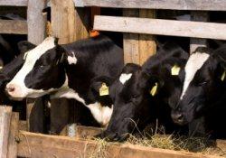 Дефицит зерна ставит под угрозу обеспеченность кормами
