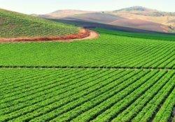 Фермерам Подмосковья предложили развивать экохозяйство